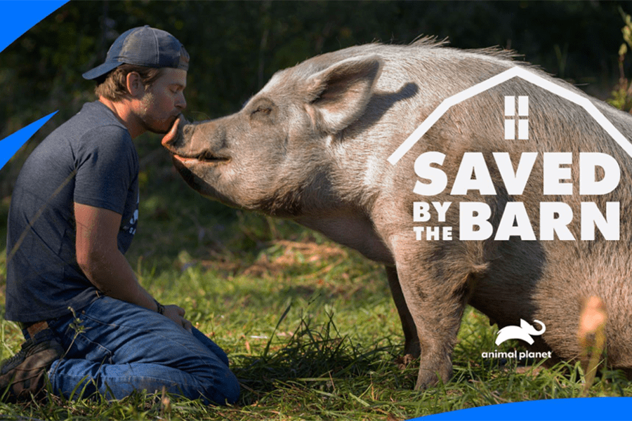 Saved By The Barn – Animal Planet