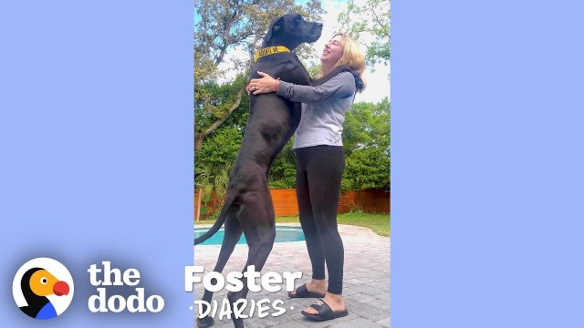 fostering a dog