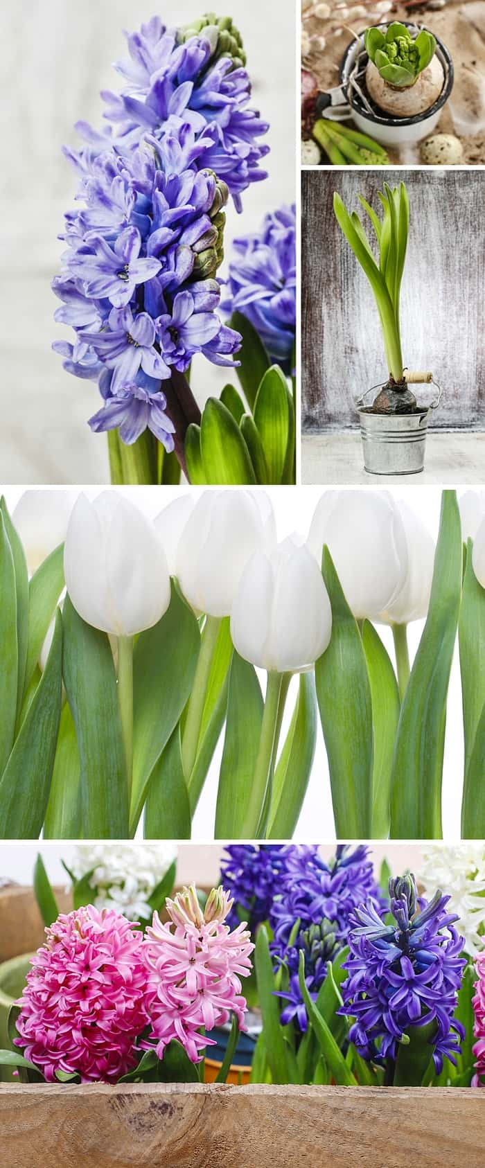 How to Force Spring Bulbs With or Without Soil *These flowers are so pretty. Perfect for Easter. Saving this video tutorial for later.