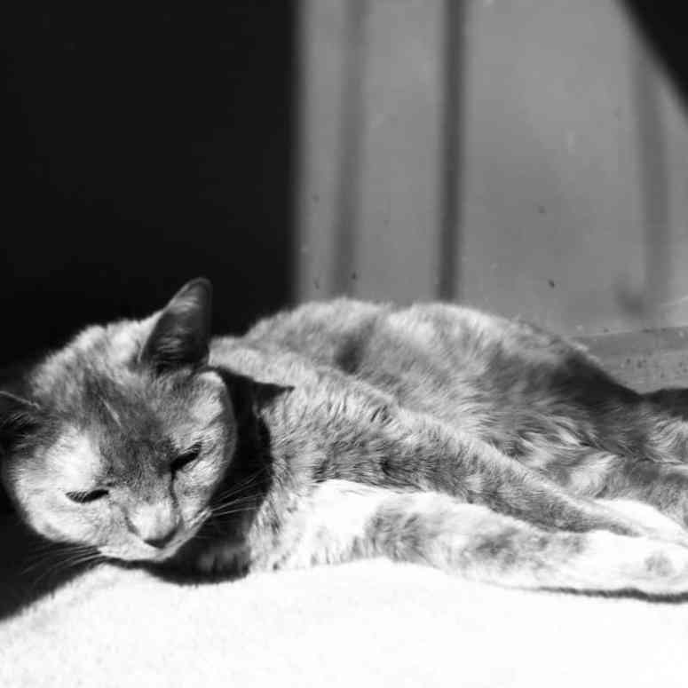 Loving these ten tips on how to capture a cat portrait. With these simple suggestions, you can rock pet photography using a DSLR camera or a smartphone. #petphotography #catportraits #photography #cat #kittycat #tortiecat #tortiecats *Adjust your photo to black & white to enhance shadows for an artistic feel