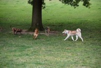 Crow Creek - Crow Creek Park is a good place to let your pup play freely.