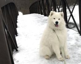 Our Buddy Kaia on the Bridge