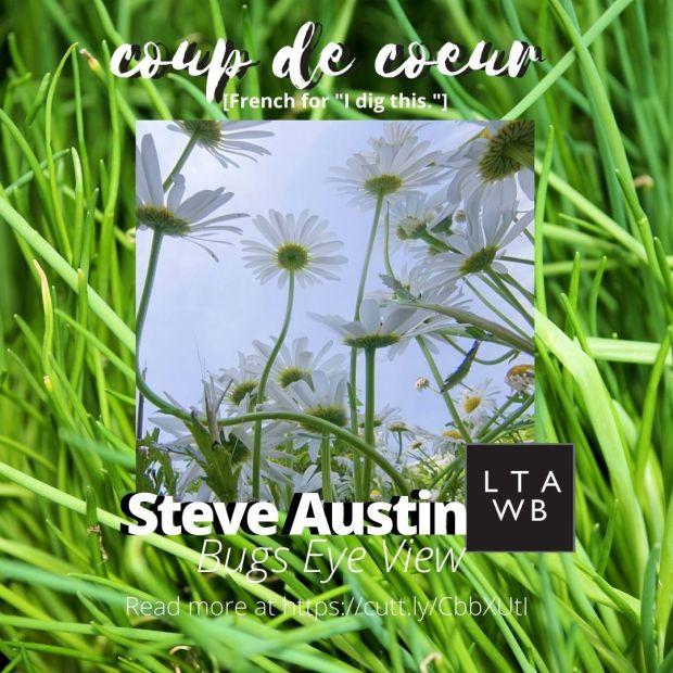 Steve Austin art for sale