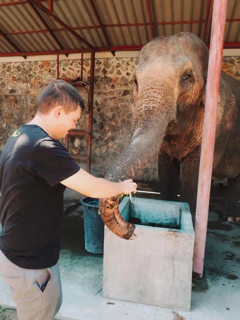 Jon feeding a beautiful rescue elephant some fruit.