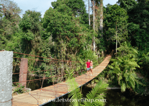 A man and woman walking over a hanging wooden bridge into a forest at Khao Yai National Park in Thailand