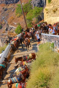 Donkeys to get down to the water from Thira.