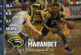 Basket – Ball : Paul Marandet élu dans le All-American NAIA First Team