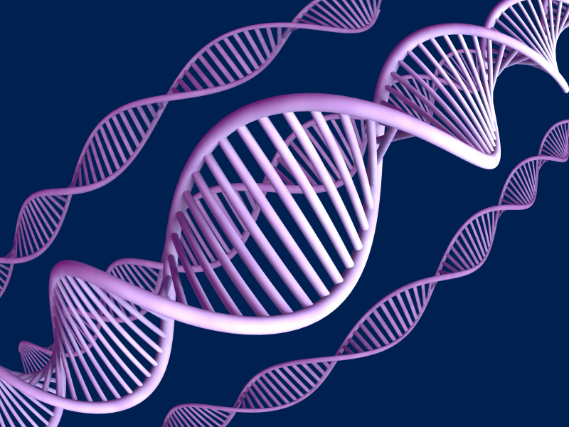 Illustration Of DNA Double Helices In Light And Medium Purple On A Dark Blue Background