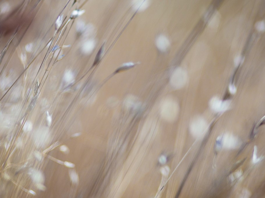 In shades of light brown, beige, and white, stalks of grasses against a tan background