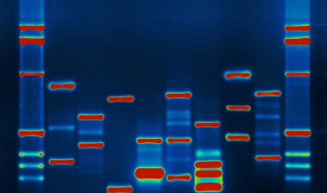 Image of DNA on a blue background showing blue columns of different lengths broken up by bands of red, green, aqua, and lighter blue.