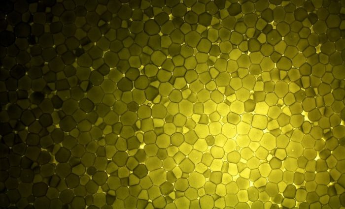 Abstract image of roundish shapes packed together, in shades of yellow to black colors