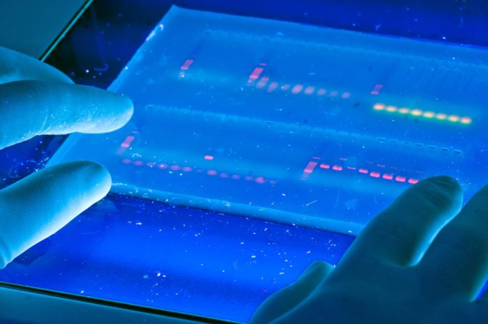 Hands holding an image of DNA analysis, in blue light.