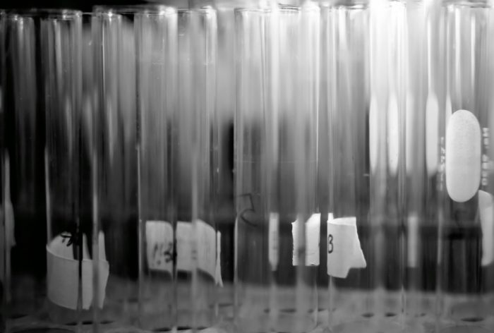 Black and white photo of test tubes upright in a rack