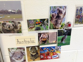 Postcards in the classroom - Koala Bears