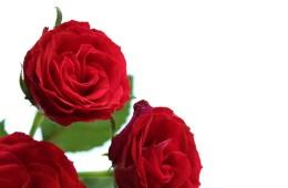 letters&beads-diy-beauty-rosenwasser-title_Rosen