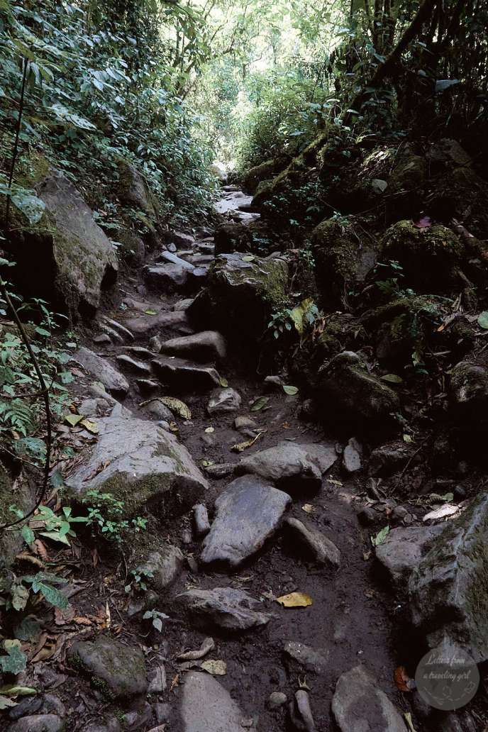 Cocora Valley hike path