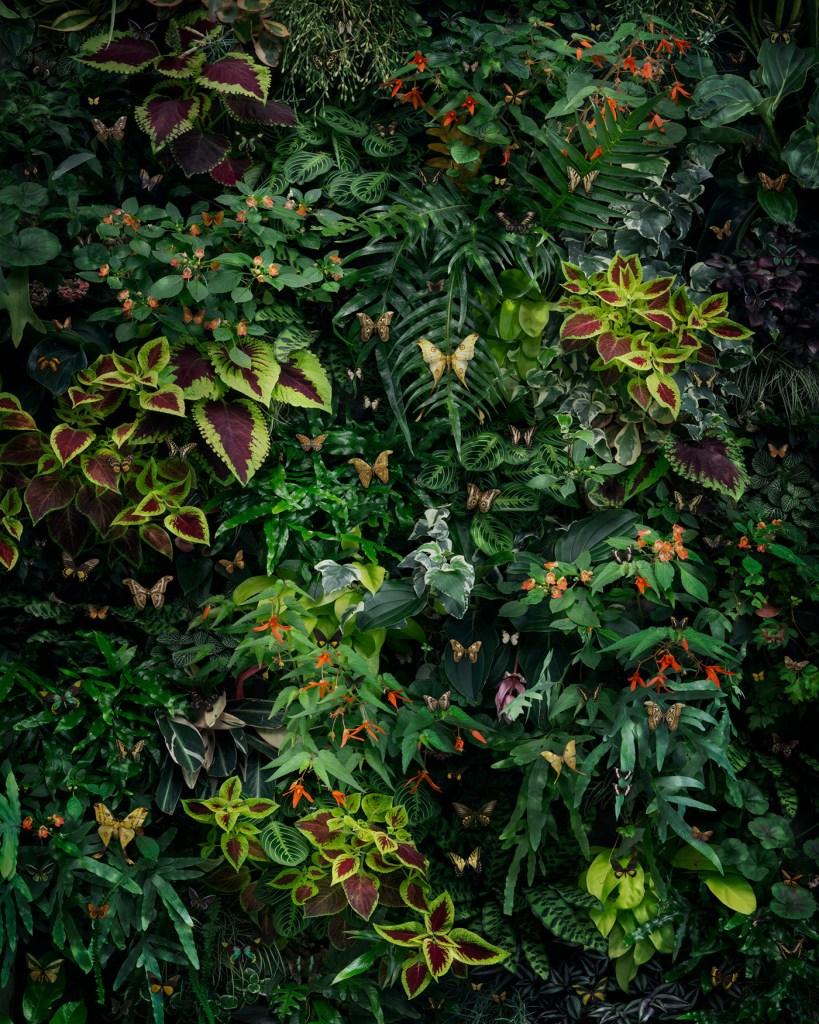 «Undergrowth», une nouvelle image à grande échelle présentant une vision hautement stylisée et modelée de la jungle, reconstituée à l'aide de photographies de plantes tropicales et de diverses espèces de papillons et de mites. Je voulais créer une image belle et captivante qui intègre mes concepts de conservation en représentant une variété d'insectes pollinisateurs uniques. Avec cette pièce, mon plan était de construire une image composite photographique qui incorpore une composition très centrée sur le design, presque comme du papier peint vivant. Nick Pedersen