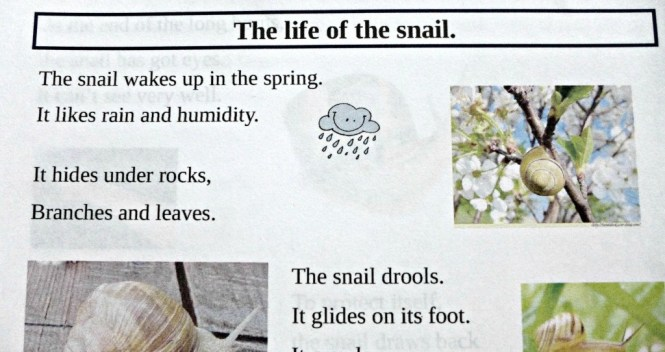 life of a snail EYFS home education
