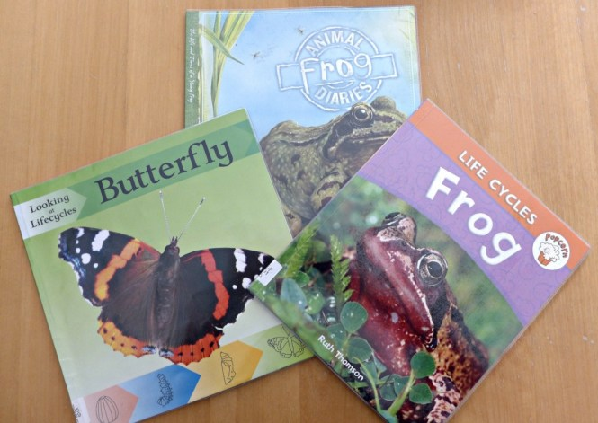 life cycle books for pre schoolers