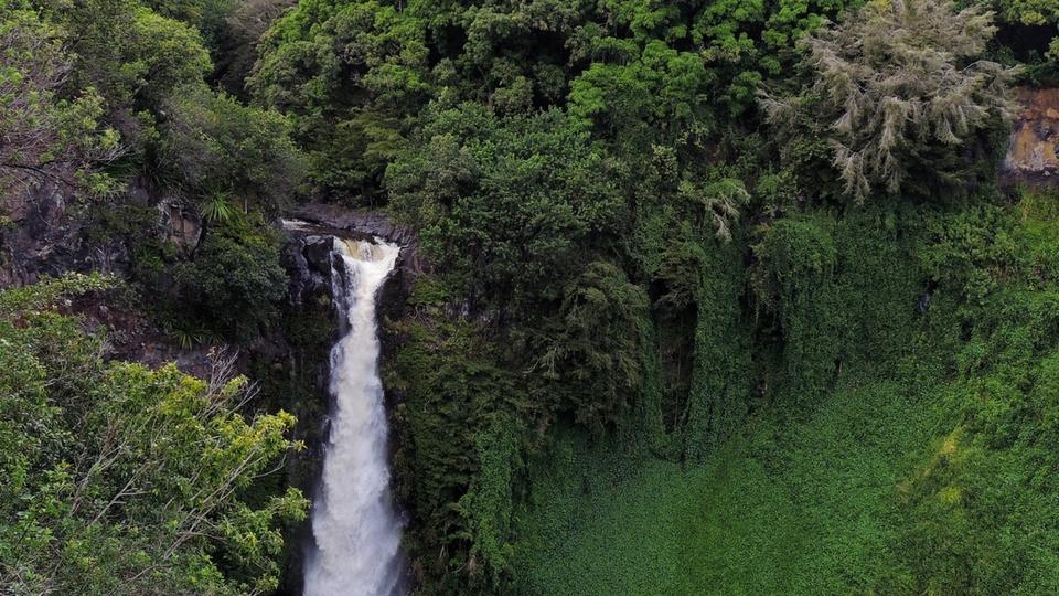Rainforest Activities for Pre-Schoolers