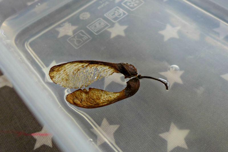 ENWC Week 1 seed dispersal