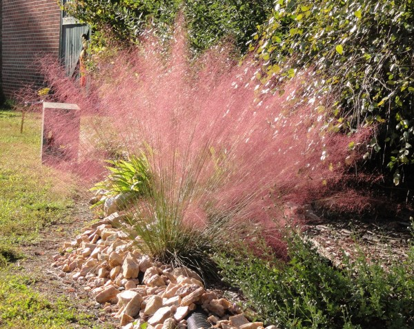 ornamental grasses in san diego