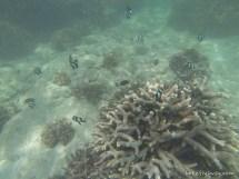 Constance Ephelia Resort Snorkeling