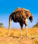 Ostrich Head Sand