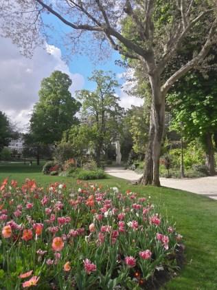 tulipes roses_Richtone(HDR)