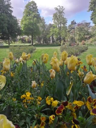 tulipes_jaunesHDR)