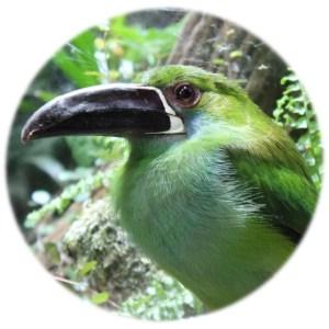 Levande text översätter och språkgranskar texter om djur, växter och natur.