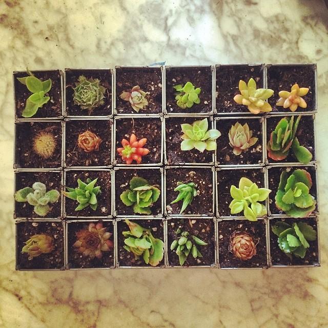 Morning creation #levasfarm #gardening
