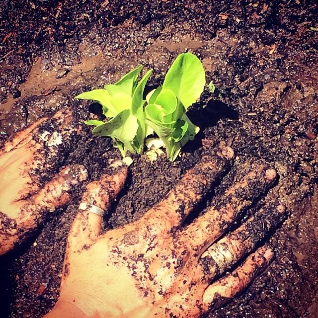 Day off 3. Gardening day #pinolehome #levasfarm