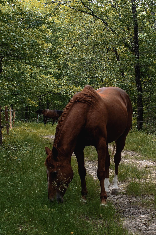 photo de chevaux dans la forêt