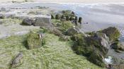 Wier op het strand 5