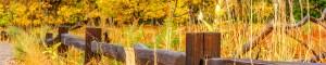 kopfoto herfst