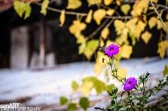 2016yds_sen6249 © LEVENT ŞEN