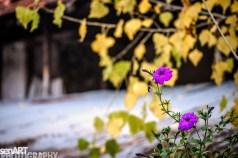 2016yds_sen6250 © LEVENT ŞEN