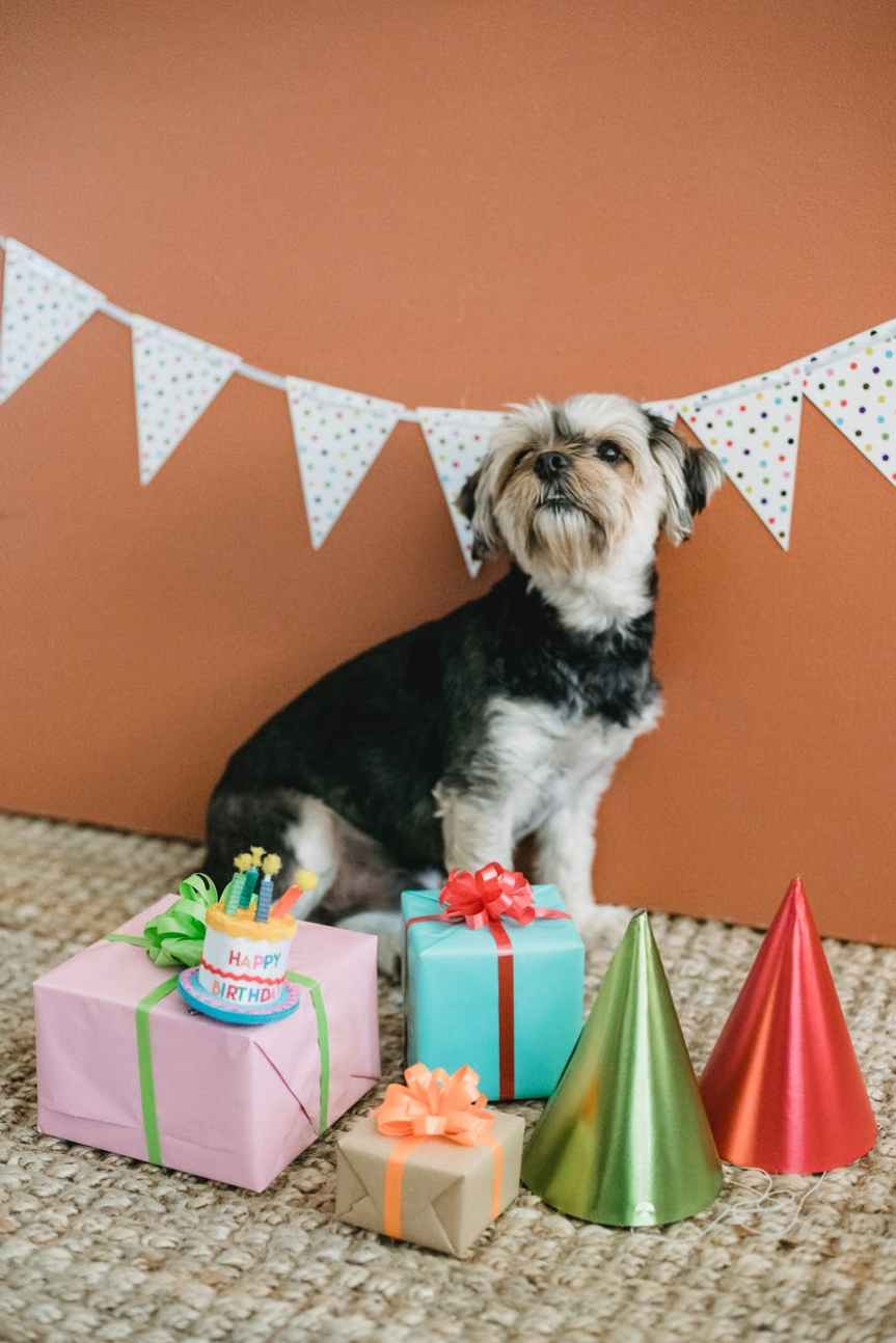 What's Your Dog Name? – Leverage Ambition
