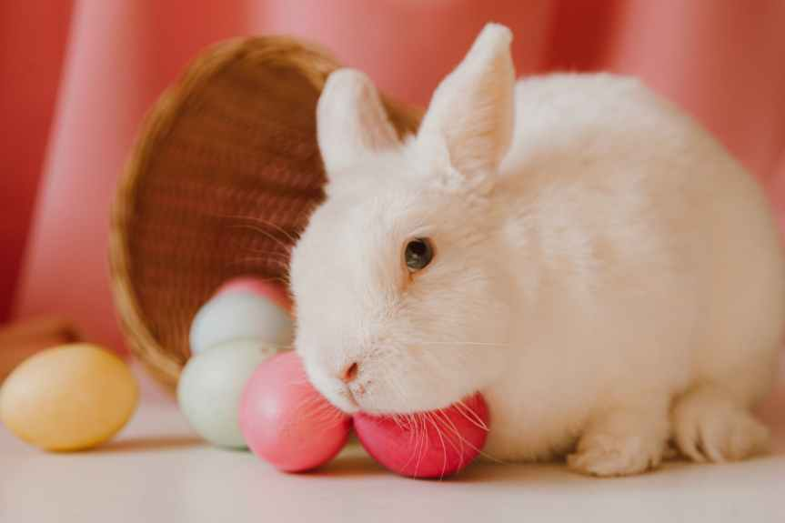 60 Happy Easter + Spring Quotes | Leverage Ambition