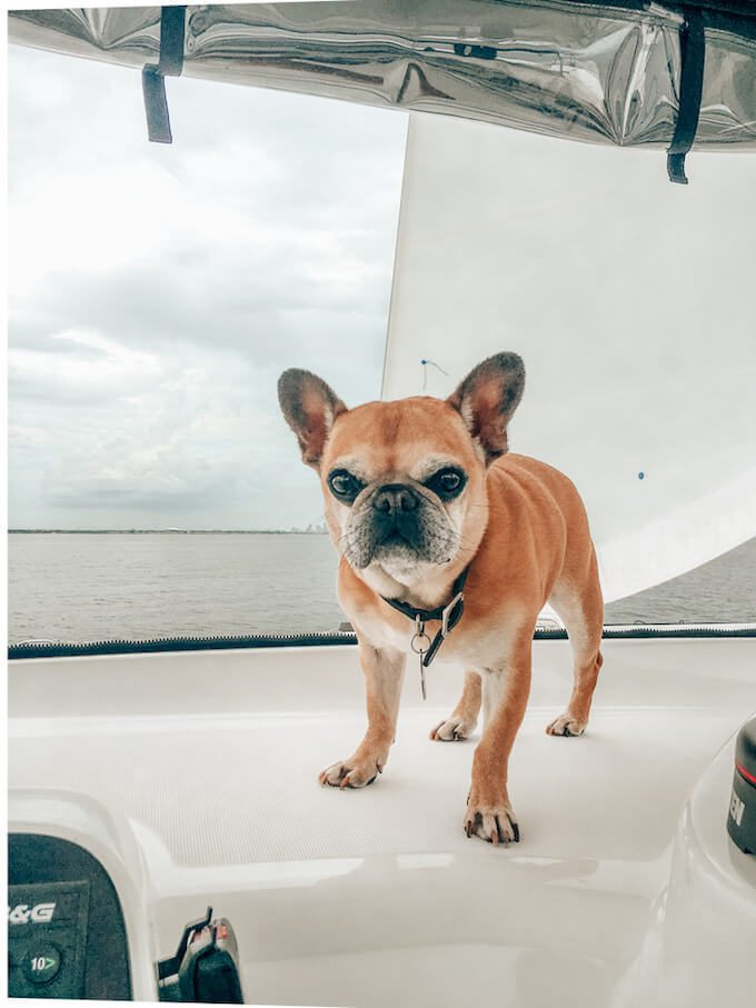 One of Michelle's dogs on the boat. The Leveraged Mama.