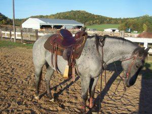 Wyoming Saddle Co
