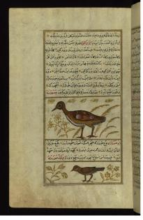 Ottoman illuminated and illustrated Turkish version of 'Aja'ib al-makhluqat, Turkey