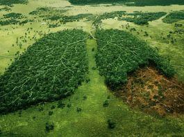 Deforestation defrisarea padurilor României