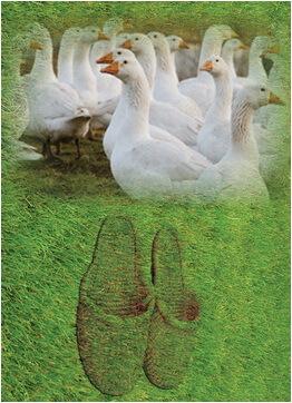 gastele-si-papucii