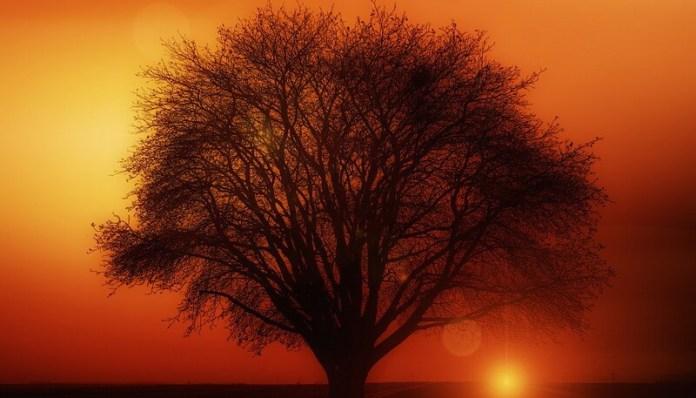 Pusa Roth Femeia si copacul proza scurta leviathan.ro