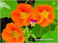 creson-indian