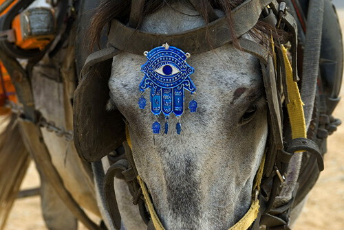 Mâna Fatimei, ornament pentru cai