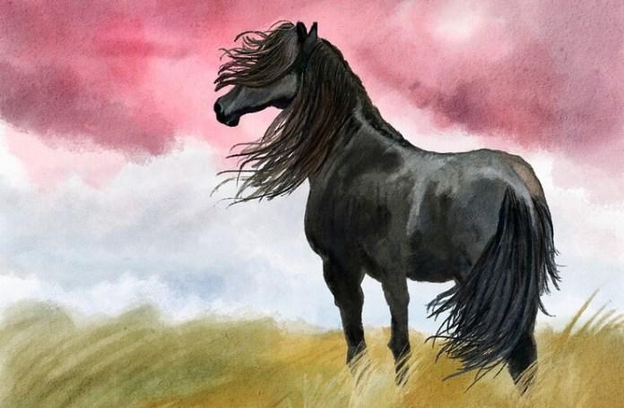 cal negru virgil matei proza leviathan