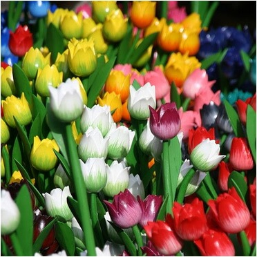 lalele-multicolore